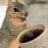 CaffeinatedSquirrel
